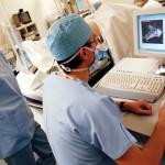 Описание розы