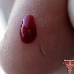 Синяя роза Сантори