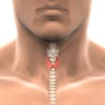 Роза Поль Сезан
